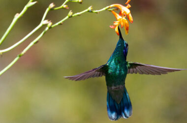Hummingbird-Near-Flowers-HD-Image