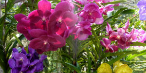 Orchids Flower Image in HD