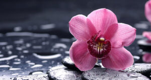 Pink-Orchid-Image-HD