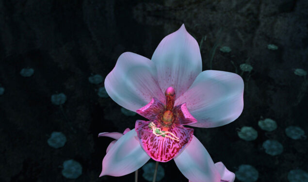 White Orchid HD Image